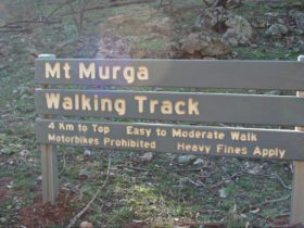 Mount Murga walking track, Nangar National Park. Photo: A Lavender/NSW Government