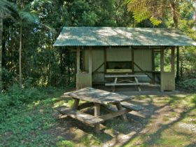 Mount Nardi picnic area, Nightcap National Park. Photo: John Spencer