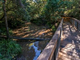 Ms Kellys walking track, Brimbin Nature Reserve. Photo: John Spencer