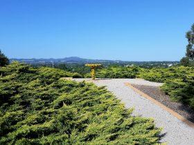 Mt Lindsay View