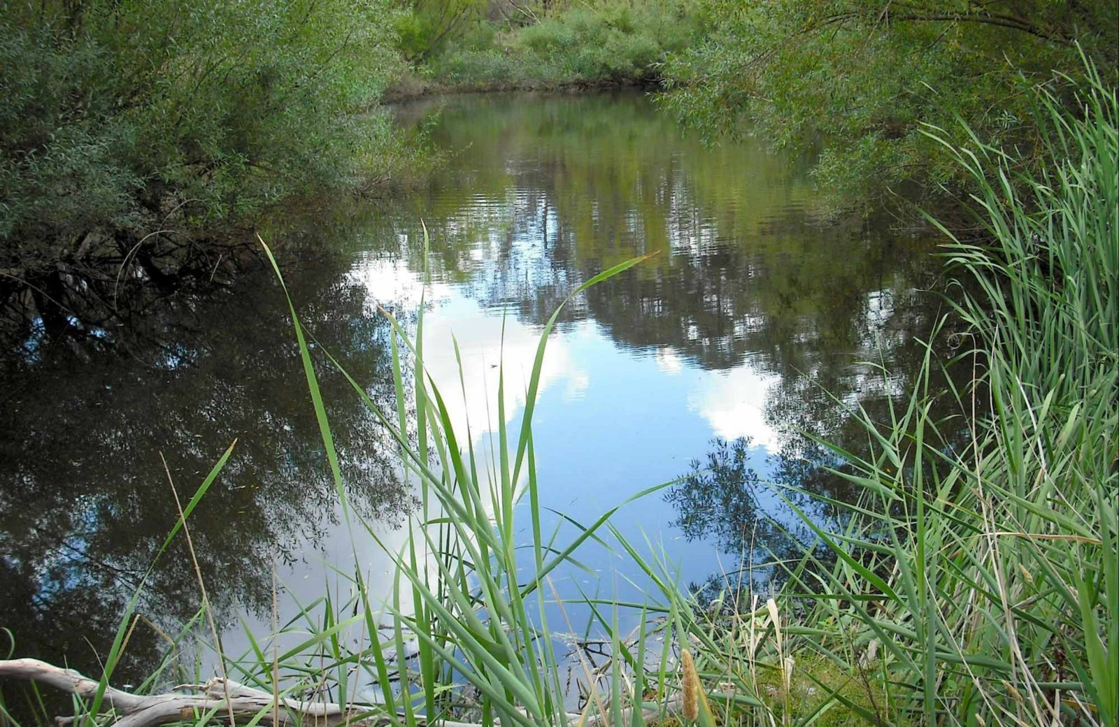 Summer Hill creek, Mullion Range State Conservation Area. Photo: NSW Government