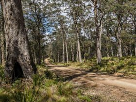 Roadside bushland, Mummel Forest Road. Photo: John Spencer