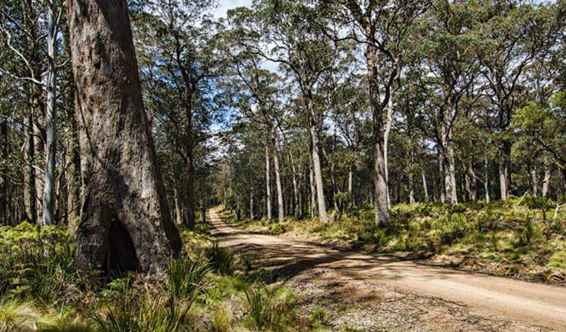 Mummel Gulf National Park. Photo: John Spencer/NSW Government