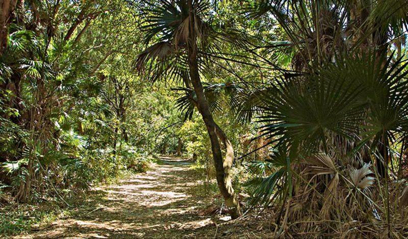Mungo Rainforest walk, Myall Lakes National Park. Photo: John Spencer/NSW Government