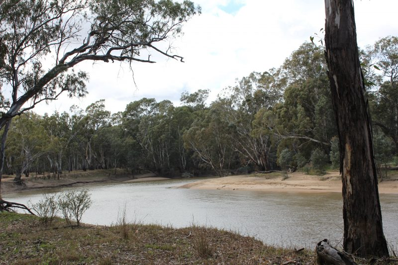 river, water, river red gum