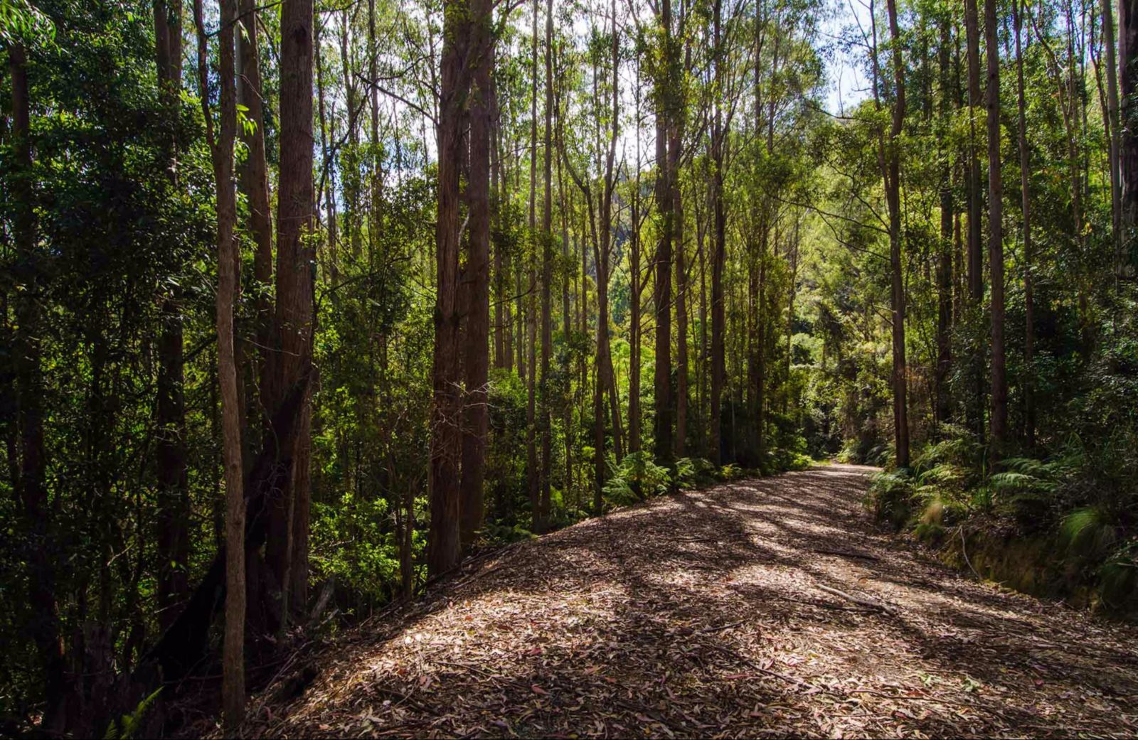 Myrtle Scrub scenic drive, Cottan-Bimbang National Park. Photo: John Spencer/NSW Government