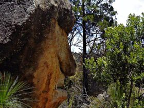 Mystery Face walk, Torrington State Conservation Area. Photo: NSW Government