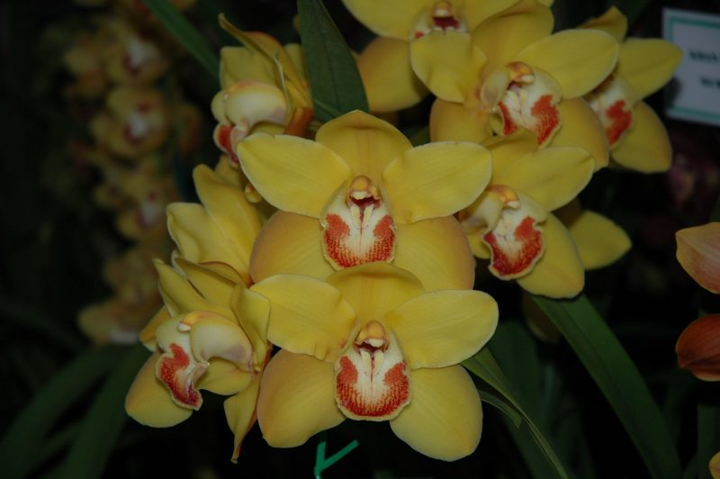 National Orchid Extravaganza