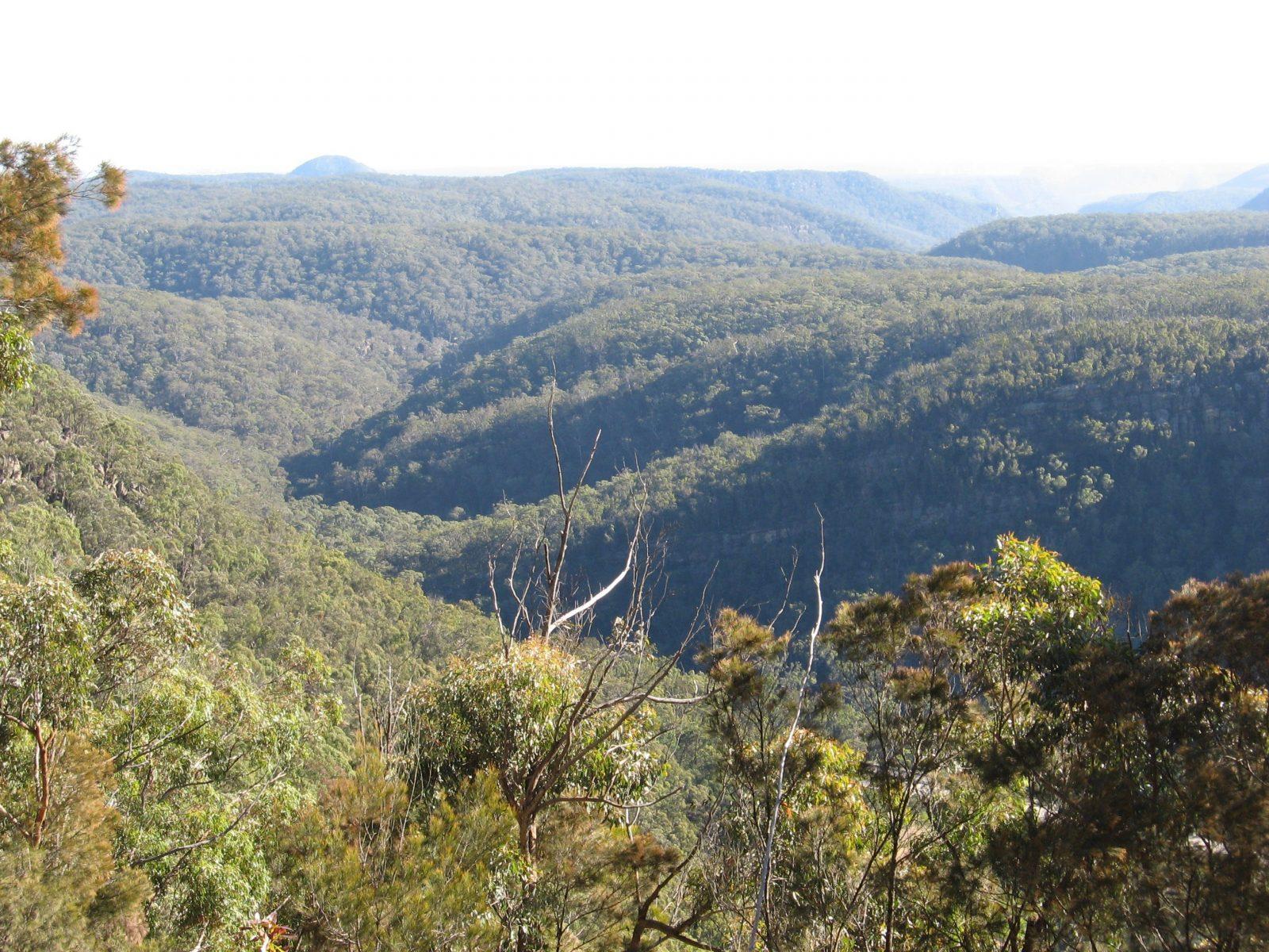Nattai Gorge Lookout
