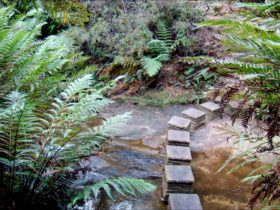 Nature track, Blue Mountains National Park. Photo: Steve Alton