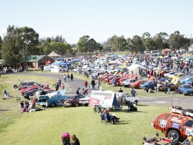 All Holden Day Show