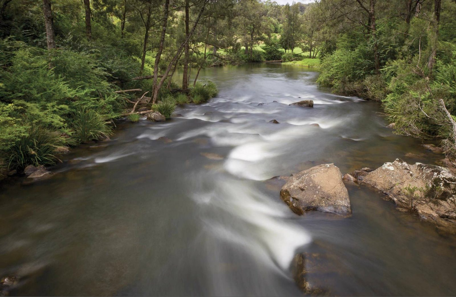 Nymboi-Binderay National Park