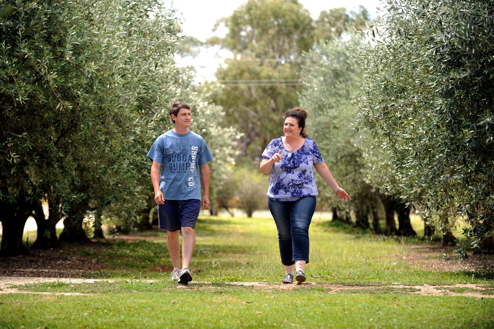 Male and female walking between two rows of Olive Trees