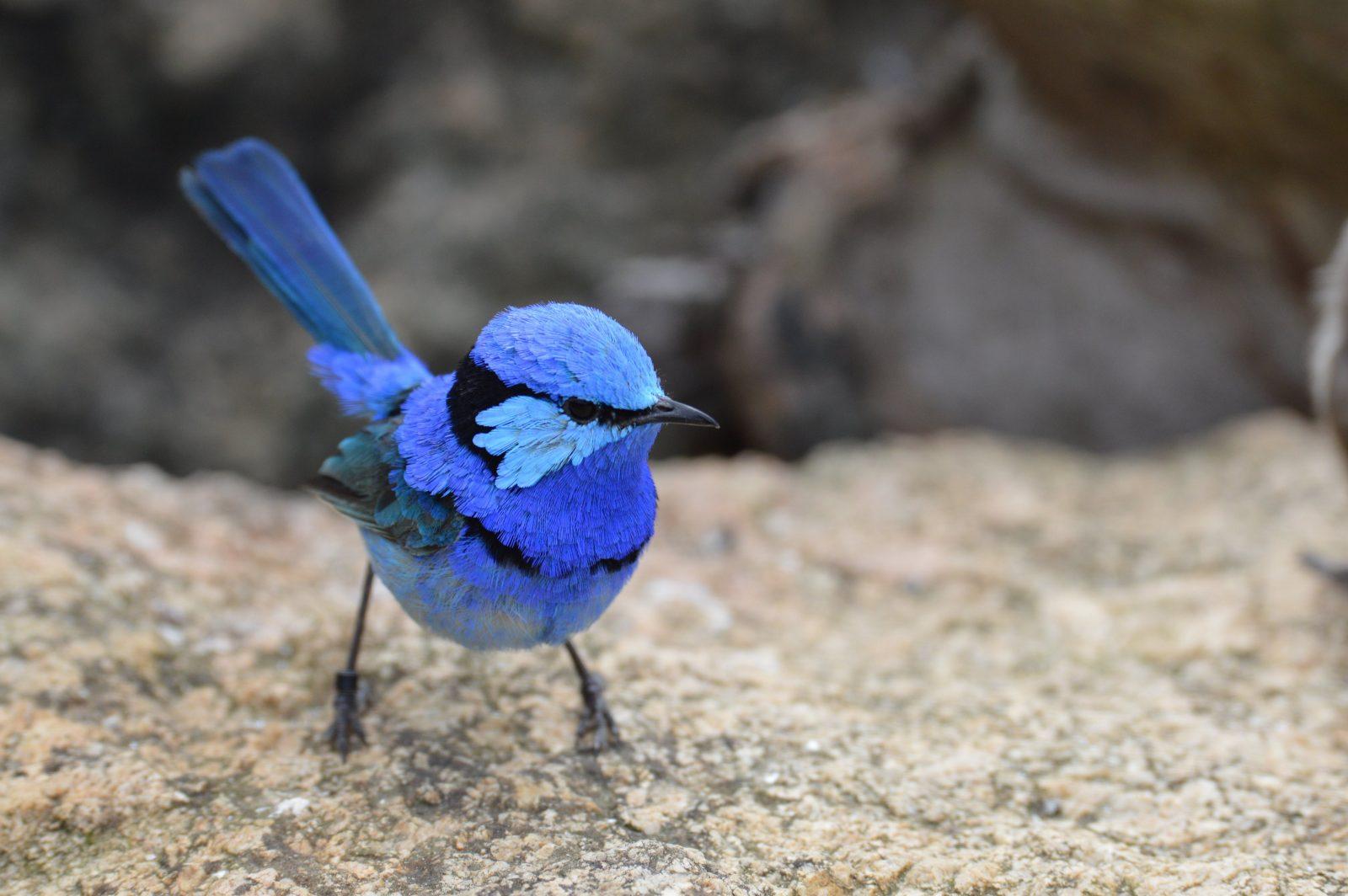 Love my blue colours?