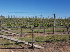 Views of the stunning Orange Vineyards