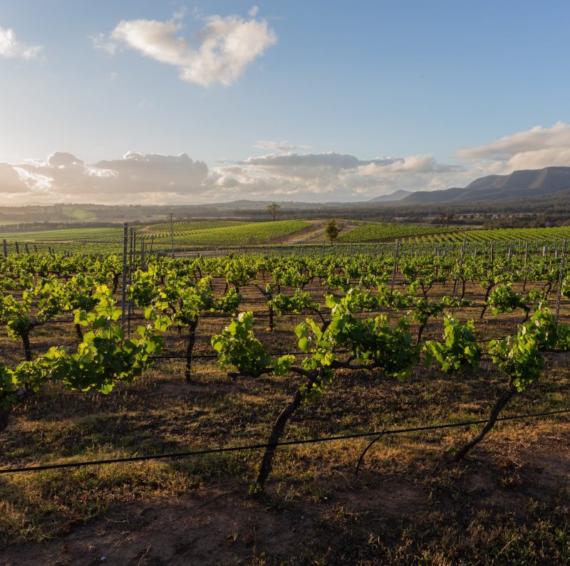 Gorgeous views of the vineyards
