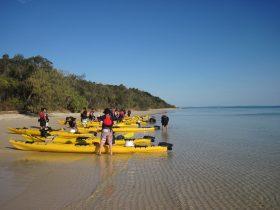 Group kayaks on beach