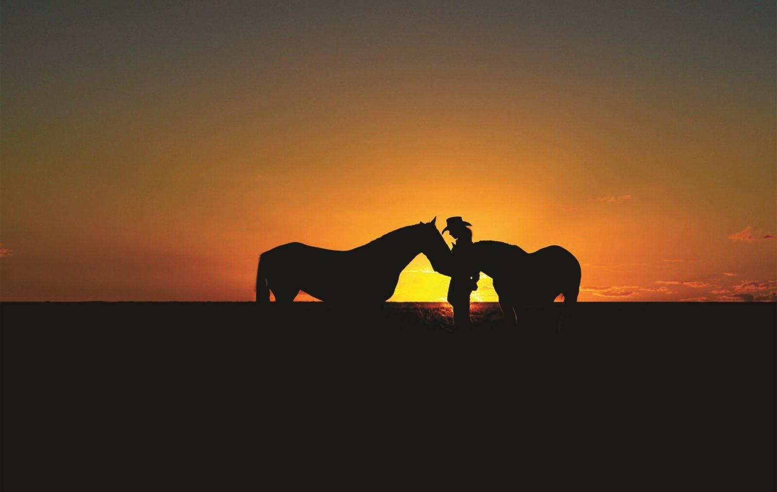 Horses in sunset near Dubbo