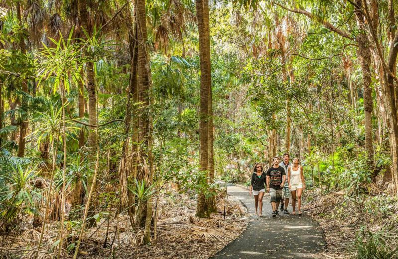 Palm Valley, Cape Byron State Conservation Area. Photo: Murray Vanderveer