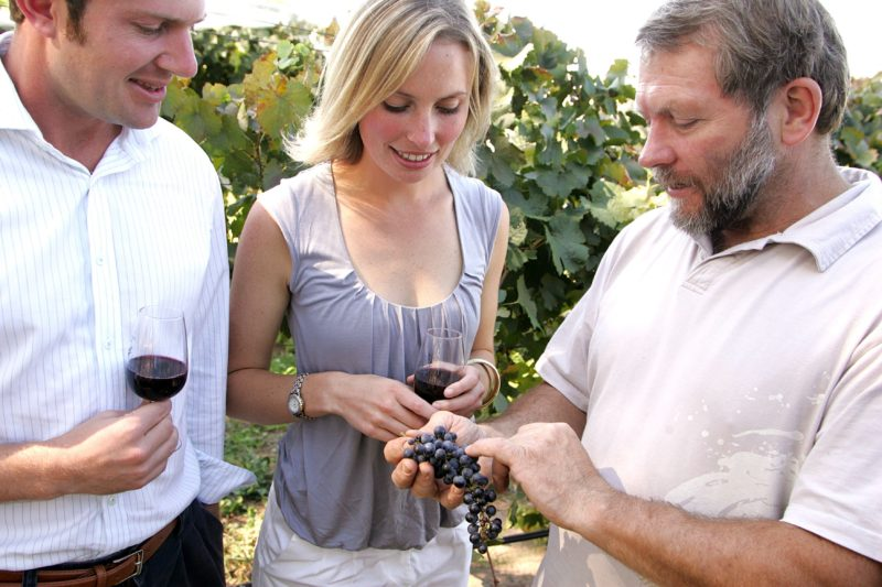 Couple learning about the grapes from vintner Allan Pankhurst