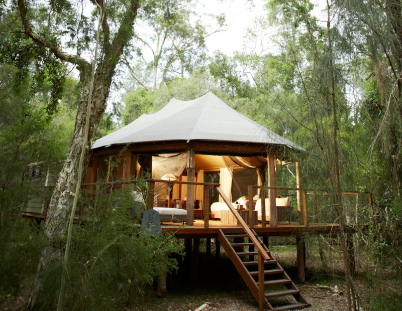 Luxury tent amongst the trees