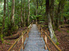 Penance Grove walking track boardwalk, Monga National Park. Photo: Lucas Boyd