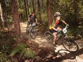 Mountain bikers in Pine Creek State Forest