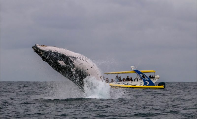 Wave Rider and Whale