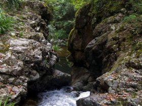 Potaroo Falls walk