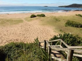 Pretty Beach to Pebbly Beach Walking Track. Photo: John Yurasek/NSW Government.
