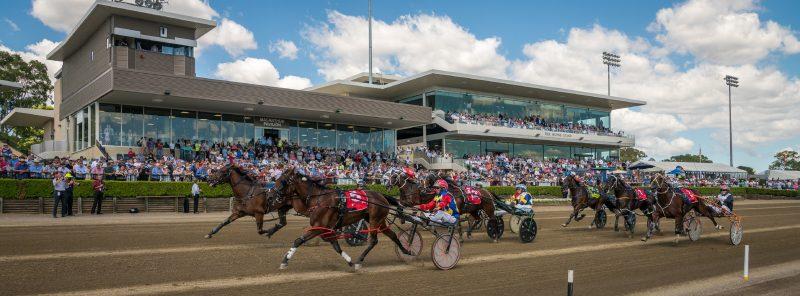 Horse Trots race