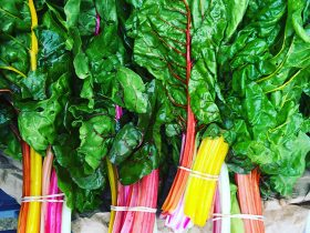 Rainbow chard at Purple Pear Farm