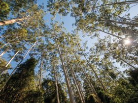 Queens Lake Nature Reserve Tall Trees