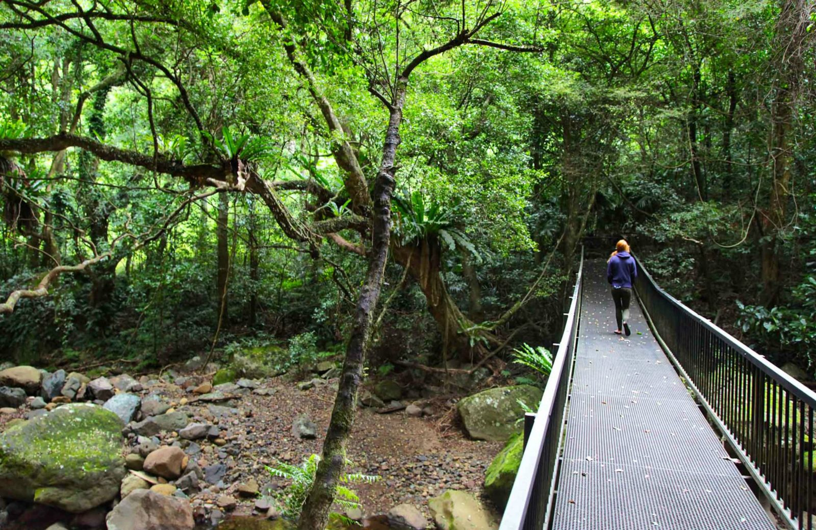 A person enjoying the Rainforest Loop Walk. Photo:Andy Richards