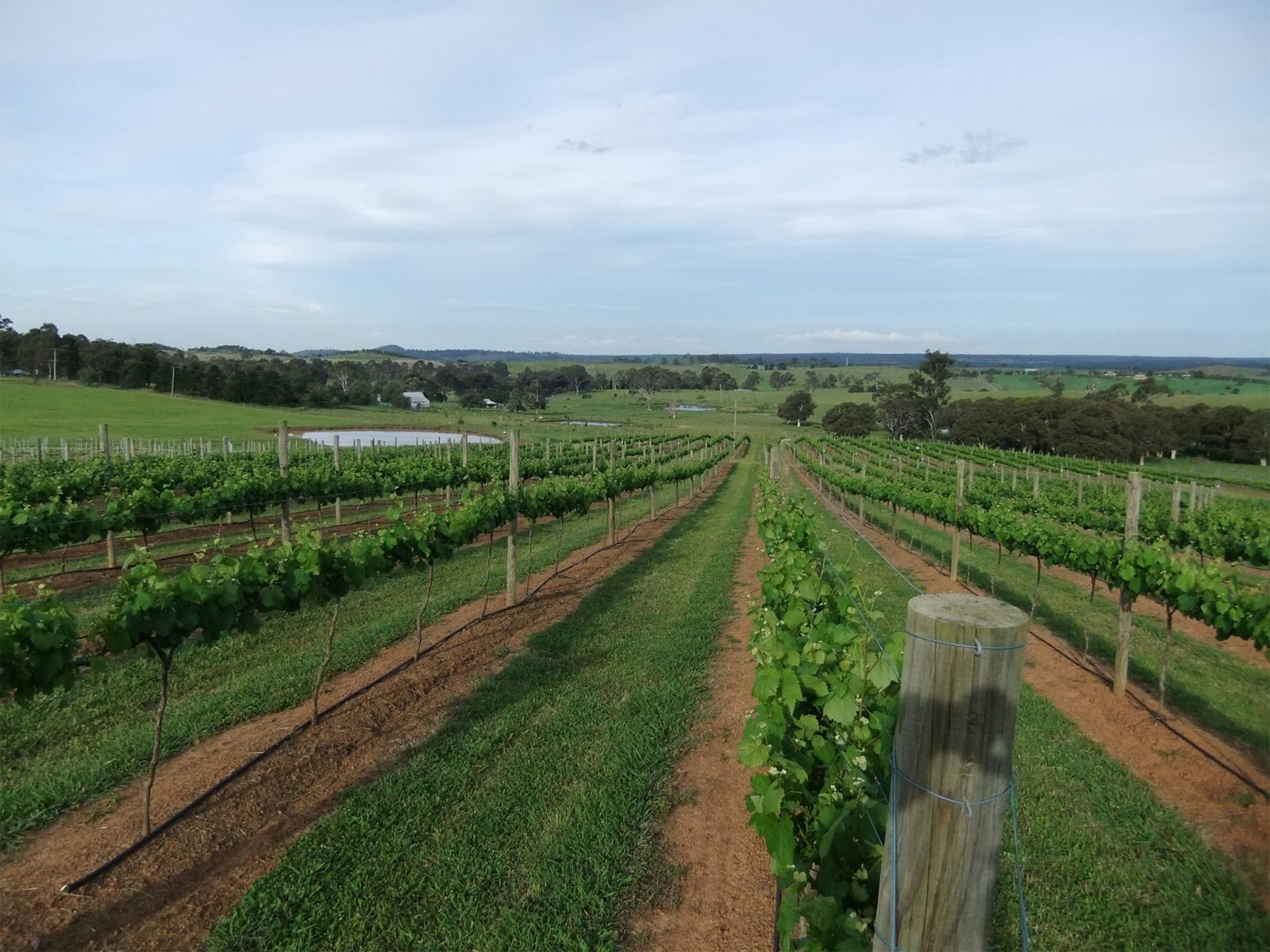 Razorback Ridge Wines