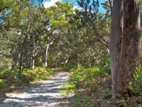 Red Gum trail