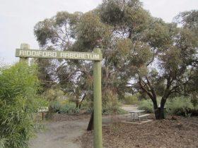 Riddiford Arboretum