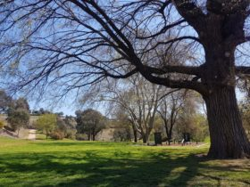Tree and exercise equipment at Riverbank Park near Yass
