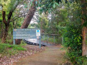 Riverside walking track, Lane Cove National Park. Photo: Debbie McGerty