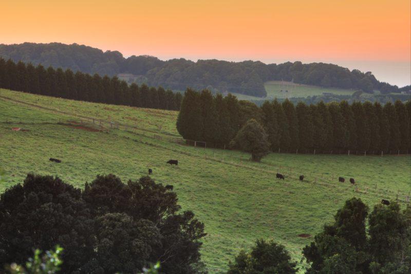 Robertson Rolling Hills