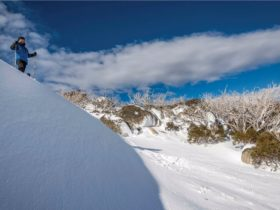 Perisher Range cross-country ski trails, Kosciuszko National Park. Photo: John Spencer/OEH