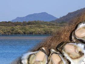 Rockin' Oysters | Sydney Rock Oysters
