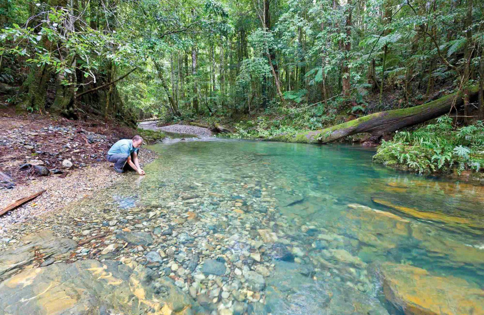 Rosewood Creek walking track, Dorrigo National Park. Photo: Rob Cleary