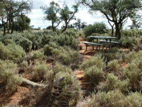 Rosewood picnic area, Mungo National Park. Photo: Lars Kogge