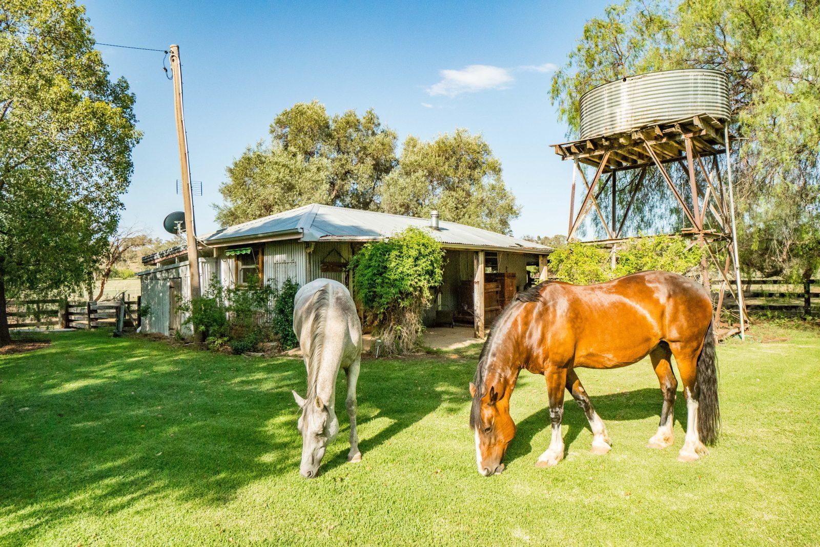Horses Rustic Farm Stay