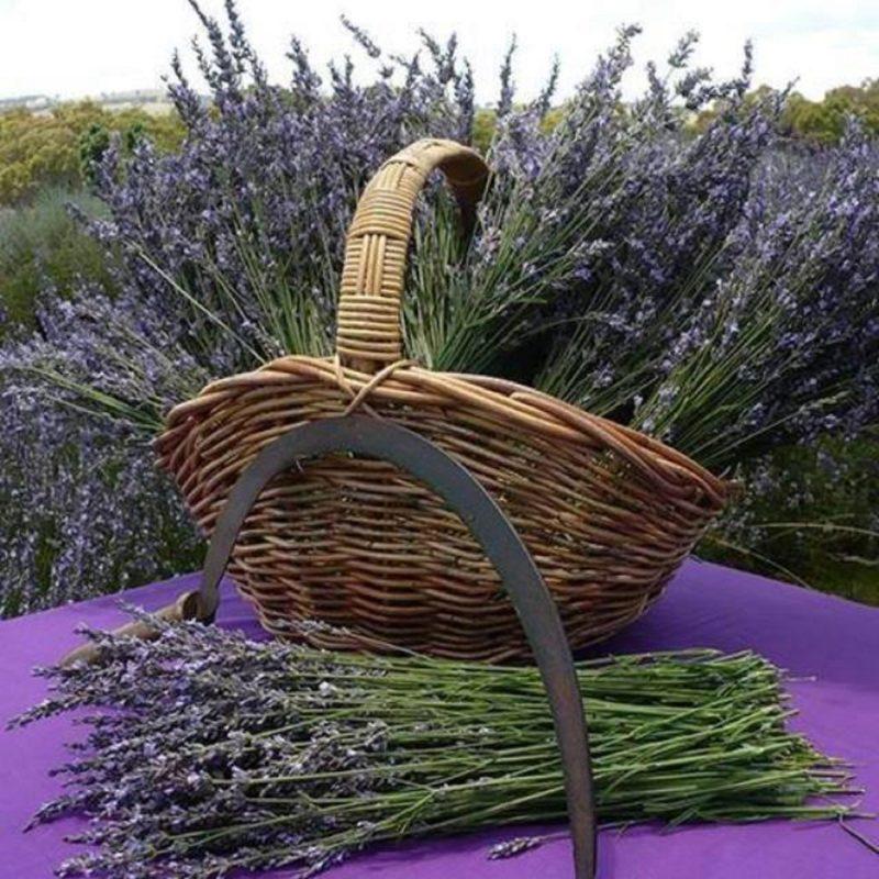 Rustique Lavender Farm