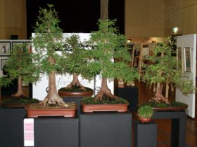 Bonsai group
