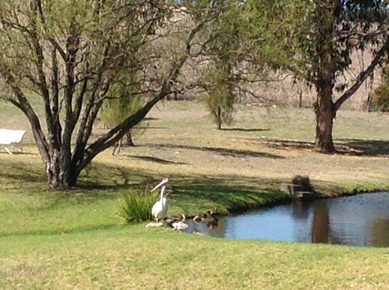 Sapphire City Caravan Park Pond