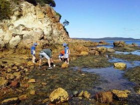 Sapphire Coast Marine Discovery Centre