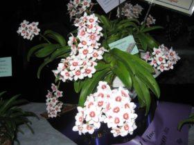 Sapphire Coast Orchid Club Aust.